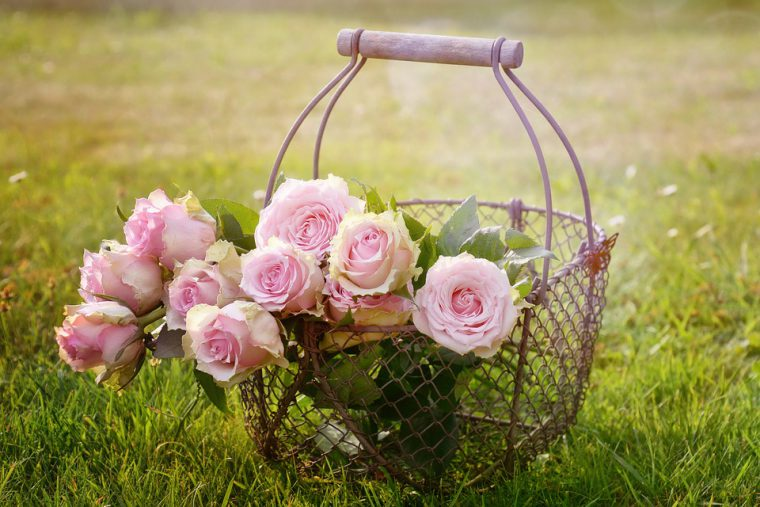 easy secrets to growing roses